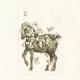 martine-favre-artiste-gravure-croquis-carte-souhaits-poney-printemps